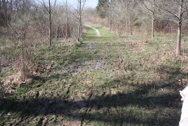 picture of muddy trail