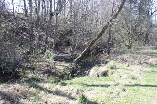 picture of trails wooded area